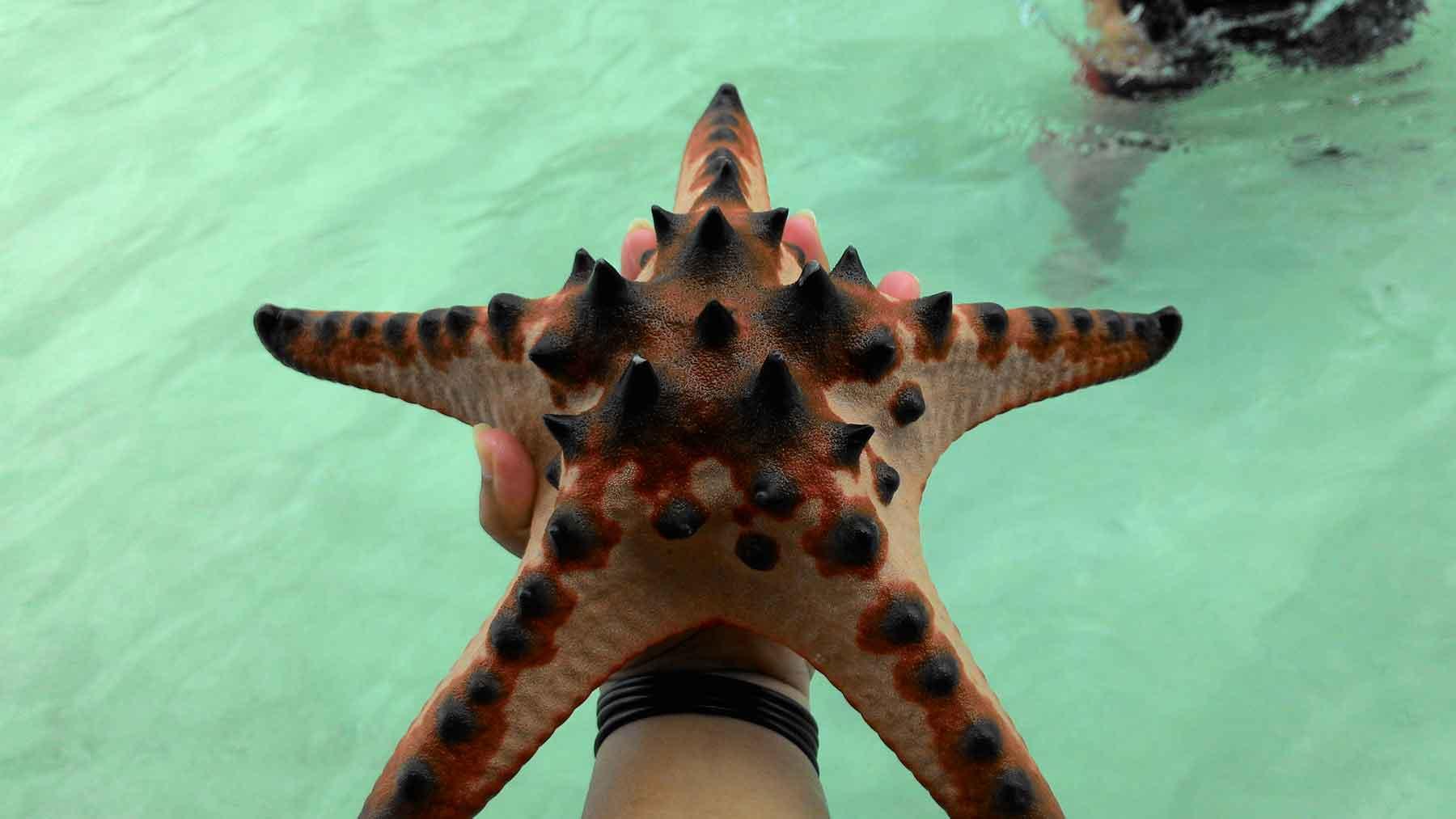 Bintang Laut Pulau Pasir