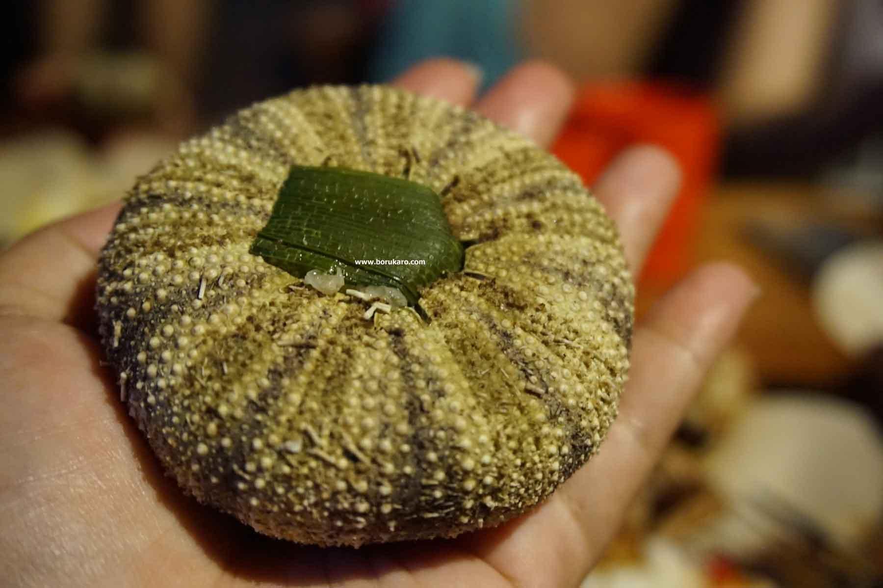Cangkang Landak Laut