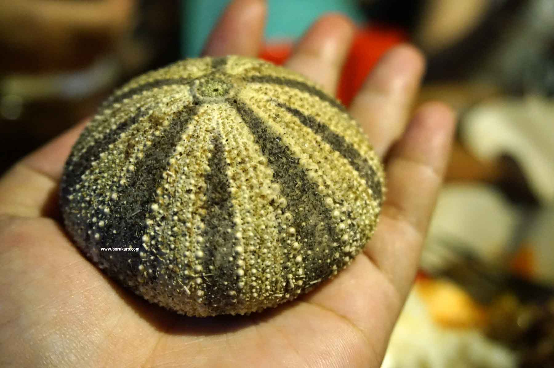 Tehe-tehe, Makanan Khas Pulau Derawan Kalimantan Timur