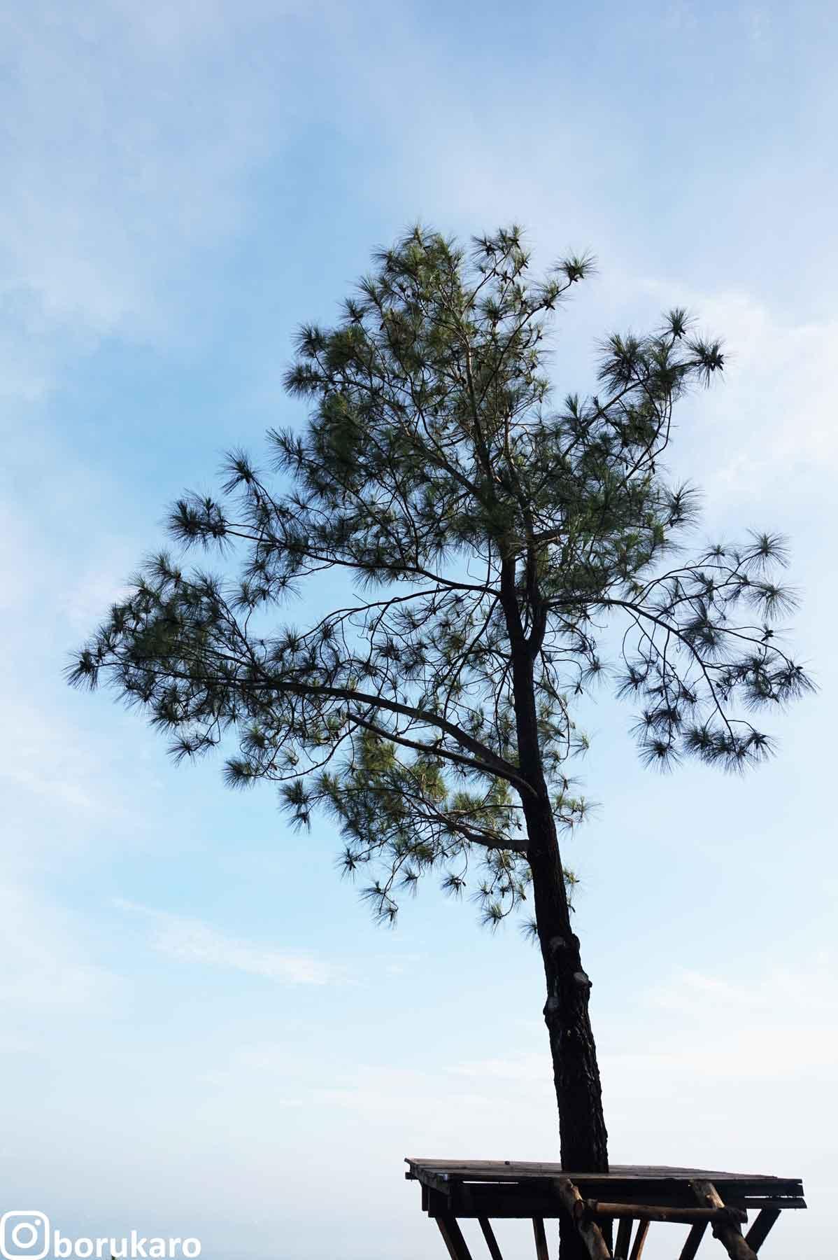 Pohon yang hits foto sama banyak orang.