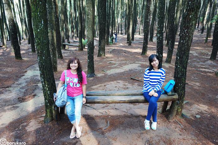 Hutan Pinus Mangunan, Lokasi Instagramable di Bantul Jogjakarta