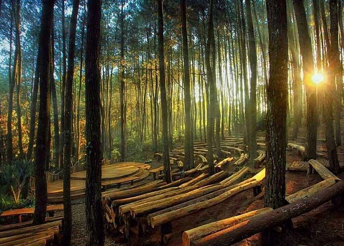 Suasana Panggung pertunjukan Hutan Pinus Mangunana. Sumber : piknikdong[dot]com